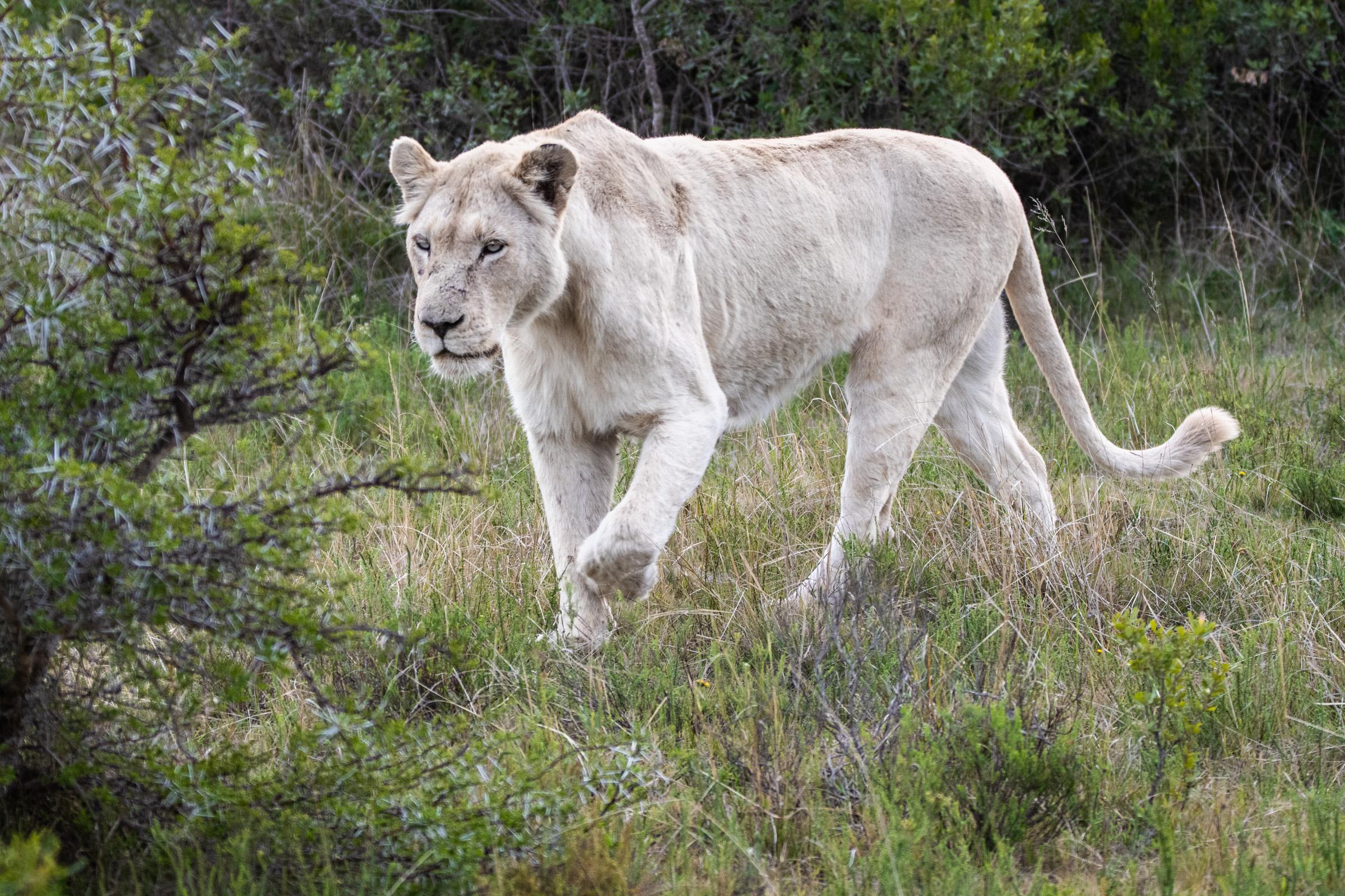 Sudafrica-113 - Copia