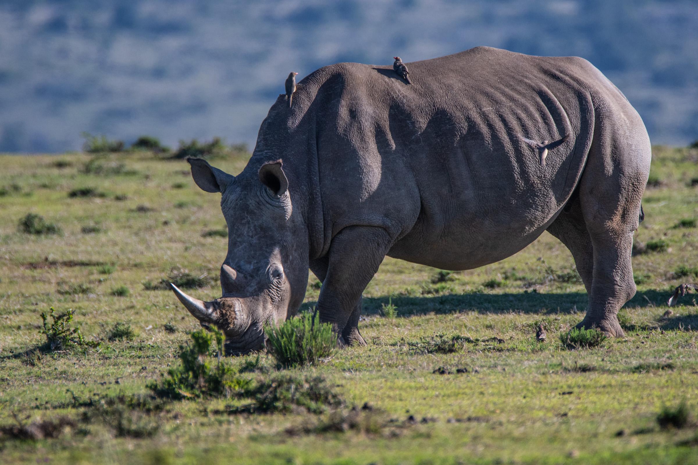 Sudafrica-139