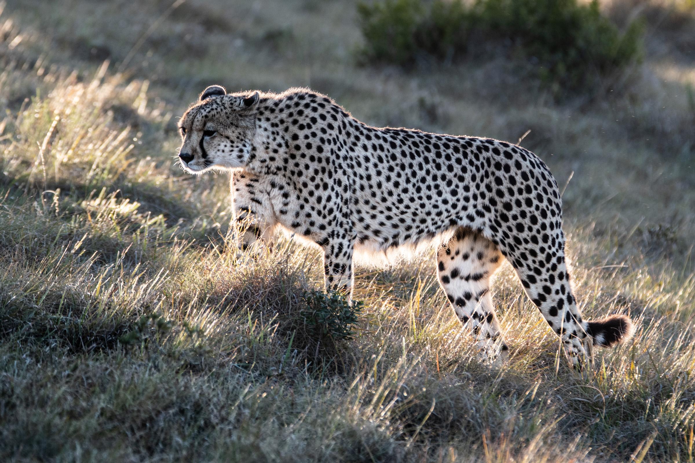Sudafrica-154