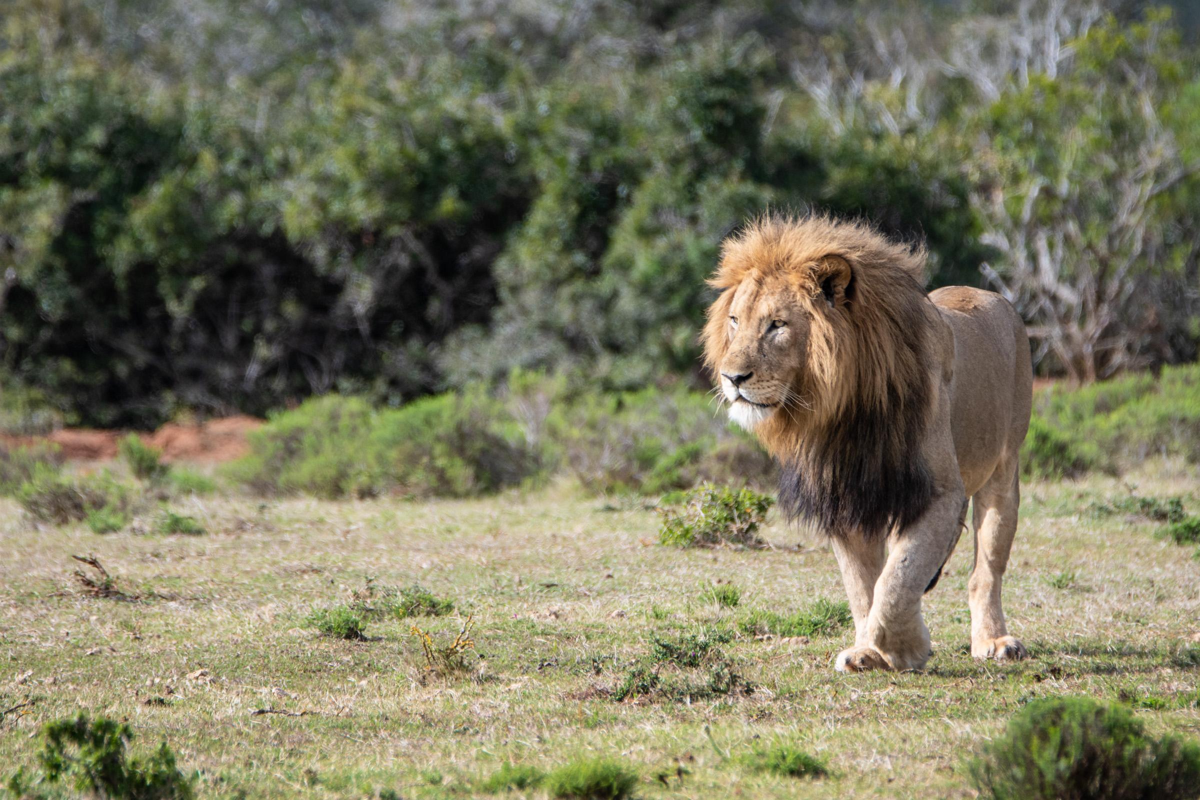 Sudafrica-169