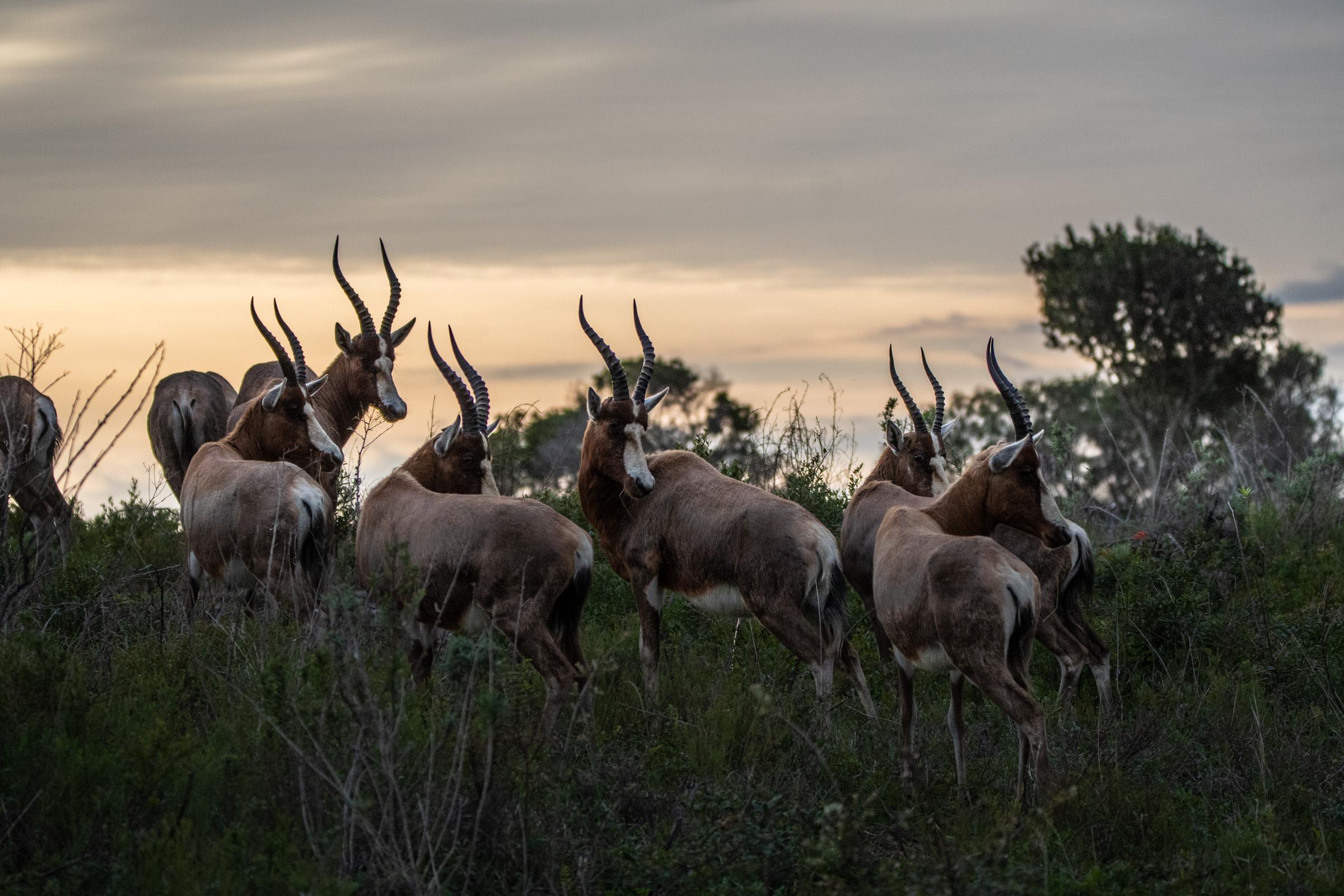Sudafrica-43