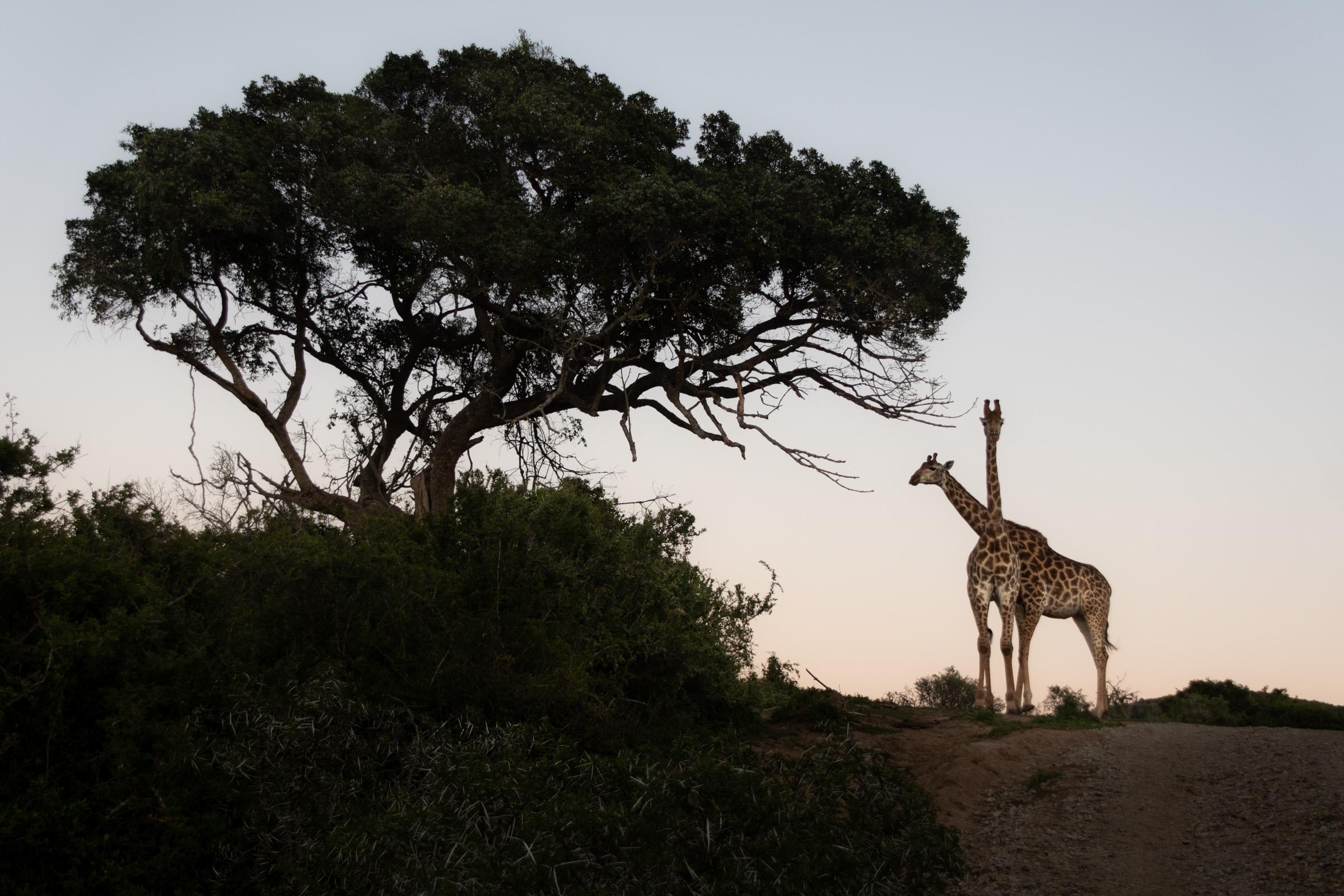 Sudafrica-92 - Copia